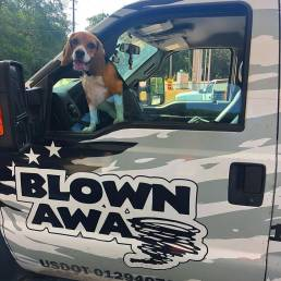 Tornado the beagle in Blown Away Truck